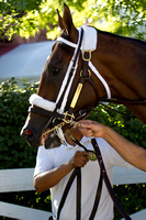 Mucho Macho Man on the Path-0300