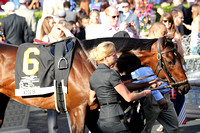 Orb before the 2013 Florida Derby